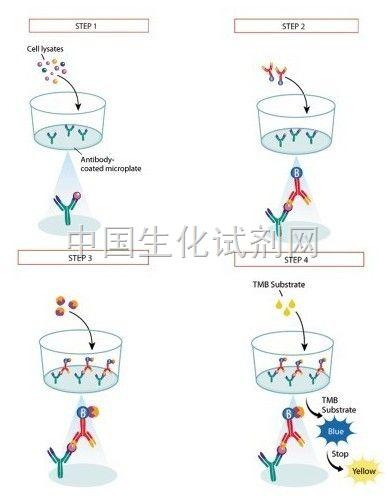 自身抗体科研elisa检测试剂盒