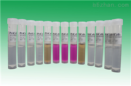 银星竹鼠肌肉成纤维样细胞特价;HBRM1