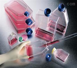花鼠皮肤成纤维样细胞特价;CHPS1