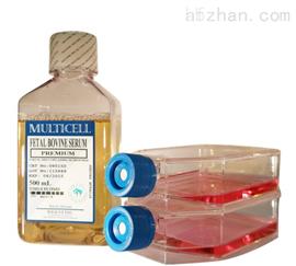 社鼠肺成纤维样细胞特价;CWBRL2
