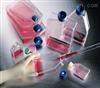 花鼠肾上皮样细胞特价;CHPK3