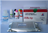 猪转化生长因子β2(TGF-β2)ELISA试剂盒